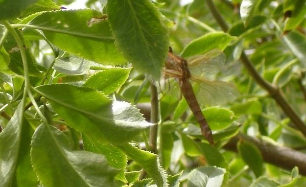 in the tree cu